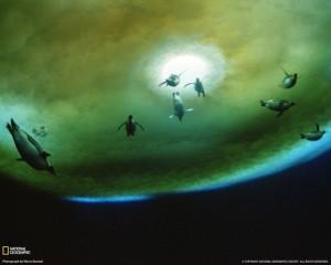 penguins-underwater-antarctica-052709-klein